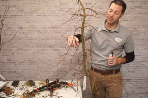 How and What to Prune in Winter Video Frame