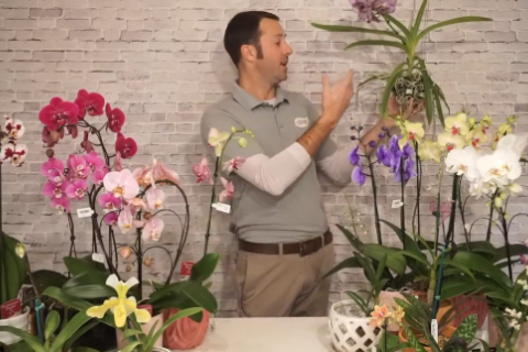 Intro to Orchids Video Frame