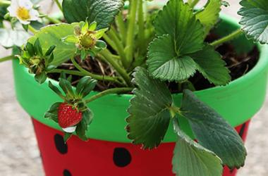 Kids' Strawberry Planting & Pot Painting